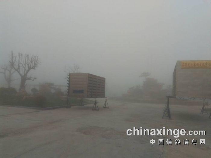 今日天气,聊城市高唐县杨屯镇大雾.