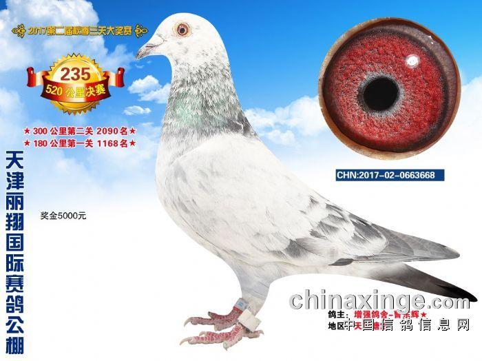 但自20世纪中期以来_天津赛鸽信息网